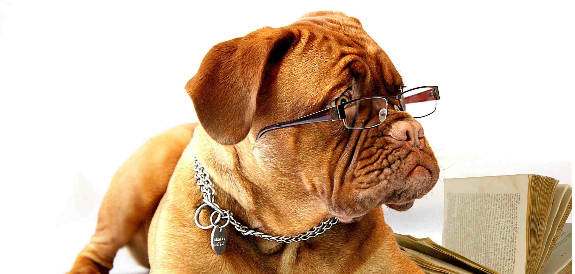 Perfect Vision Opticians